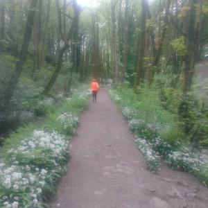 Skipping back home through Fairy Glen - delightful whatever the season.