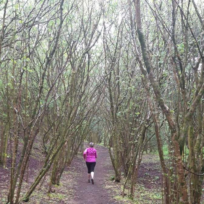 The superb trail through the woods near Newton, Porthcawl. A terrific roller-coaster of a path through woods and dunes.